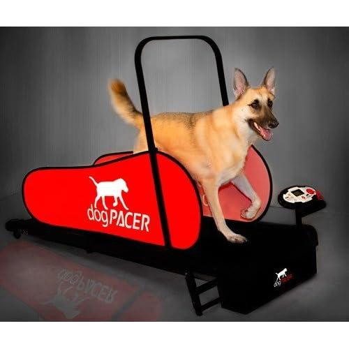 Image result for dog treadmill