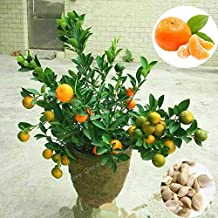 Yellow0pcs Bag Edible Fruit Meyer Lemon Plants Exotic Citrus Bonsai Lemon Tree Fresh Talkingbread Co Il